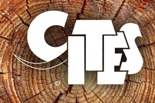 Rosewood CITES解禁契機